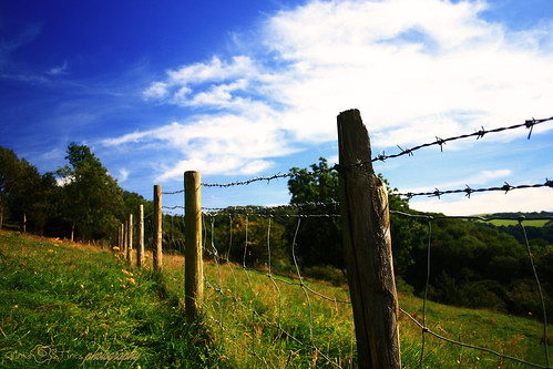 `Happy Fence Friday!