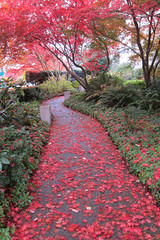 Library path (D70) Tags: autumn red canada leaves gardens square outside bc path library bob burnaby civic civicsquare prettie