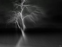 Hurricane (Amiela40) Tags: black tree rain vent noir wind sandy hurricane pluie arbre panne noirceur ouragan vividimagination shockofthenew awardtree déracinement bestcapturesaoi elitegalleryaoi uprootingtree hurricanesandy