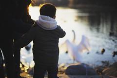 My first encounter with an angel (HOWLD) Tags: sunset people kids angel children geese wings feeding ducks swans flare encounter howd oaklandlake oaklandgardens howardlaudesign feedinggroup