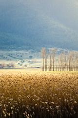 stymfalia (helen sotiriadis) Tags: blue trees sun canon landscape gold published grain greece peloponnese canon70200f28lisusm stymfalia canoneos6d  ayearofpictures2013