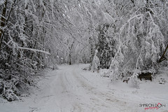Beautiful snow (Sharon Dow Photography) Tags: uk trees england snow cold ice beautiful pretty britain freezing surrey icy leithhill