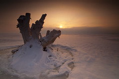 Stumped_DSC4469_E (antelope reflection) Tags: winter sunset lake snow color reflection tree ice clouds utah antelopeisland greatsaltlake stump utahstatepark nikond90 tamronn1024