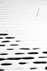 388/731 (Vlachbild) Tags: winter snow oneaday blackwhite daily photoaday pictureaday project731 2013inphotos project73122january2013 project731388