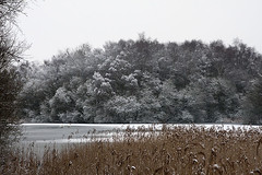 Lincolnshire - Messingham Sand Quarry (Ben Revell) Tags: trees winter england snow landscape frost lakes lincolnshire ponds naturereserves messingham msq messinghamsandquarry