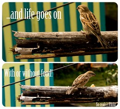Bird thoughts (So-real!) Tags: food fast thoughts shutter housesparrow nikond3100