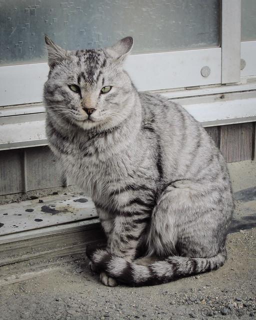Today's Cat@2013-02-02
