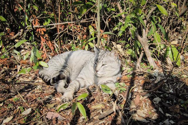 Today's Cat@2013-02-04