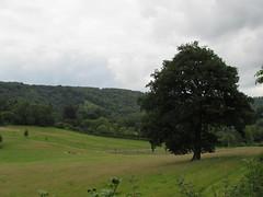 Steep: View of Shoulder of Mutton Hill (Hampshire) (michaelday_bath) Tags: steep hampshire