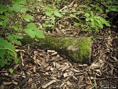 (Cristina Ovede) Tags: airelibe musgo naturaleza nature selvadeirati
