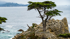 The Lone Cypress Tree (thecheetahexpress) Tags: ocean california trees tree beach water rock pacific hills pebble lone cypress