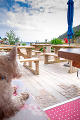 Talland Bay Cornwall 2016 (Deirdre Gregg) Tags: cornwall summer 2016 coast sea holiday england harbour tourism talland bay beach huts cafe dougal dog westie