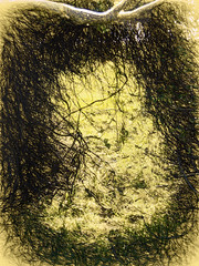 The Hole in the Hedge (Steve Taylor (Photography)) Tags: hedge hole art digital brown yellow newzealand nz southisland canterbury bankspeninsula branch texture vignette littleriver