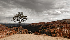 Rain's coming over the hoodoos (Guillaume DELEBARRE (Guigui-Lille)) Tags: bryce canyon west usa ouestamricain utah clouds cloudysky pluie nuages arbre sadness america canon tamron2470f28 6d guillaumedelebarre guiguilille landscape paysage hoodoos