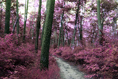 Honey come home (someoneandthewhale) Tags: forest pink purple magenta plants fantasy unreal road lake trail exploring adventure other planet methane