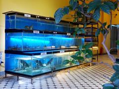 Fresh seafood (Roving I) Tags: seafood fish lobsters tanks acquarium trees tiledfloors restaurants dining freshness madamlan danang vietnam