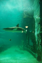 Sydney in the Summer (klarmane) Tags: sydney gelato messina cronut darlingharbour whiterabbitgallery operahouse manlybeach aquarium sydneytowereye