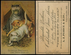 A. J. Peirce & Brother Trade Card, circa 1890s - Valparaiso, Indiana (Shook Photos) Tags: tradecard ajpeirce peirce shoe shoes footwear retail retailer business businesscard reynoldsbrothers valparaisoindiana valparaiso indiana portercounty cat cats feline felines mouse