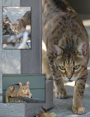 In the wild (stilllifephotographer) Tags: straycat