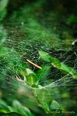 Spider Web Funnel (matt_huff_photography) Tags: spider web green summer forest leaves leaf webs