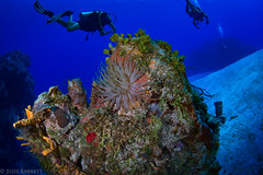 Cozumel (jcl8888) Tags: wildlife nature life alive outdoor diver anemone reef coral nauticam saltwater sea ocean underwater vacation travel mexico cozumel 1017mm tokina d7200 nikon diving scuba
