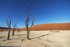 Sossusvlei - Namibia (wietsej) Tags: sossusvlei namibia sony a7rii a7rm2 landscape nature dunes dead tree sal1635z