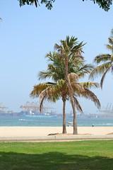 palms (Gina's Atelier) Tags: palms palmen beach strand fujairah vae uae