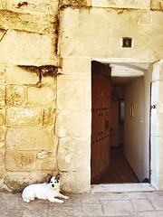 El guardin (yanitzatorres) Tags: espaa larioja casa mascotas animales puerta perro doors dogs
