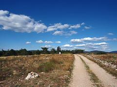 Walking... (@oloarge) Tags: trieste carso sentiero cielo natura colori path sky nature colors