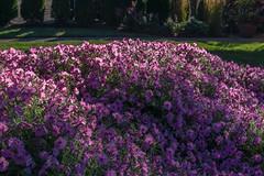 _DSC0109 (johnjmurphyiii) Tags: 06416 connecticut cromwell hillside originalnef scovill summer tamron18270 usa bracket flowers johnjmurphyiii