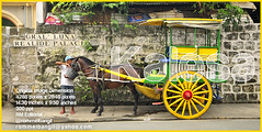 Kalesa Calesa karitela caritela or Horse drawn carriage. Horse mounted with carriage being serve by Cochero kutsero with drinking water in Intramuros Manila Philippines ( Photograph  ROMMELBANGIT ) (ROMMEL BANGIT) Tags: google feeding philippines transport transportation manila kart cart publictransport intramuros kalesa facebook horsedrawncarriage calesa breastplate fulltank youtube kutsero workinghorses nakedeye karitela woodcart cochero yellowwheels drivinghorses rommelbangit horsesandriders caritela daddypro xxxdeal oilpriceincrease