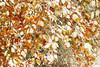 changing seasons (.:: Maya ::.) Tags: park autumn winter red orange white snow color tree green fall yellow forest woods colorful central national leafs есен beech balkan зима дърво сняг балкан мазалат централен буки mayaeye mayakarkalicheva маякъркаличева