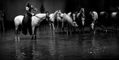 Cavalia (juliet_earth) Tags: show horses animals caballo caballos teatro animales entretenimiento cavalia horselover theather entretainment theathre