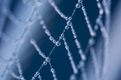 Tight rope walker (nils.rohwer) Tags: macro water closeup spider droplets drops nikon web spiderweb dew droplet 105mm d90