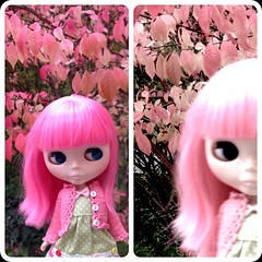One fine fall day Valentina ,Ava and I went out for walk looking for leaves that had the most beautiful colors... #blythedoll #trudolly #truphotographer #fall #blytheinpink