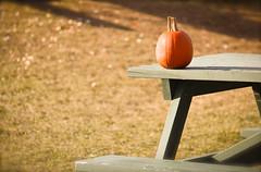 (A Great Capture) Tags: thanksgiving autumn toronto ontario canada fall halloween pumpkin table picnic farm or scarborough calabaza markham zucca lal kuerbis kürbis citrouille kabocha on labu pumpa abóbora 南瓜 ald abobora pompoen カボチャ cucurbita kabak whittamores dynia kaddu pampoen torontophotographer pepon dlaat ash2276 ashleyduffus कद्दू ashleylduffus wwwashleysphotoscom bhopala puimcin isquotersquash tikba