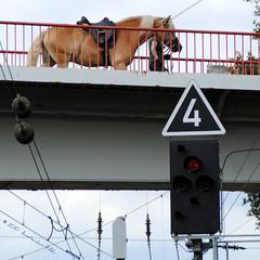 Horse passing railway by bridge (Amsterdam RAIL) Tags: bridge horse germany cheval deutschland footbridge 4 railway sein duisburg pferd paard catenary railwaysignal seinen bovenleiding entenfang