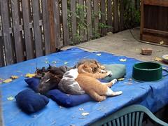 Hurricane prep (Jimmy Legs) Tags: street cats backyard shelter bushwick catbed shantytown feral