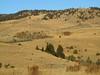 Montana Elk Hunt - Bozeman 7