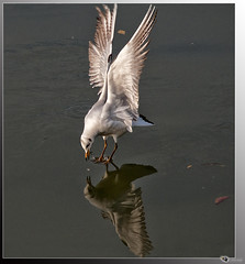 gull (acki2011) Tags: ngc soe greatphotographers thegalaxy nikond300 absolutelyperrrfect ringexcellence blinkagain dblringexcellence tplringexcellence rememberthatmomentlevel1 rememberthatmomentlevel2 bestevercompetitiongroup me2youphotographylevel1
