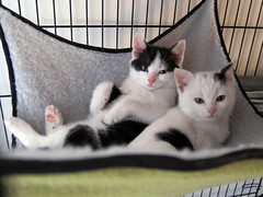 Hammock bunnies (Jimmy Legs) Tags: street cats kittens bushwick adoptable ditmars