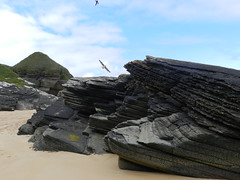 Jagged Edge, Strathy Bay, Strathy, Sutherland, 2016 (allanmaciver) Tags: jagged edge strathy bay beach sutherland north coast scotland details close black shiny sand birds fly sharp height tower allanmaaciver