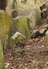 Leaves (_MissMoneyPenny_) Tags: travel cemetery republic czech prague praga jews viaggio tombs tombe cimitero repubblica ceca ebrei