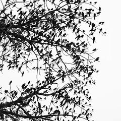 Un descanso (Memo Vasquez) Tags: undescanso aves birds bw blancoynegro siluetas silhouettes memovasquez