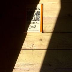 UNTITLED PROJECT: CABIN [THOREAU], Detail (untitledprojects) Tags: conrad bakker conradbakker untitledprojects untitled projects art artist sculpture painting things