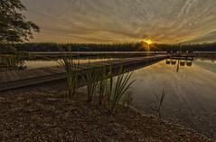 20160720-IMG_1739-Edit.jpg (Gary Phillips2010) Tags: pinewoods
