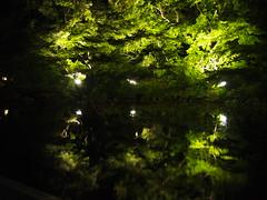 Nocturnal Vision on Water (brisa estelar) Tags: maple leaves green night lightup reflection lake garden tokugawa samurai traditional japan asia outdoor summer