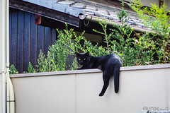 Today's Cat@2016-08-24 (masatsu) Tags: cat catspotting thebiggestgroupwithonlycats pentax mx1
