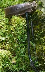 Moss on a rolling.....brace (JKiste2008) Tags: afo caliper leg brace