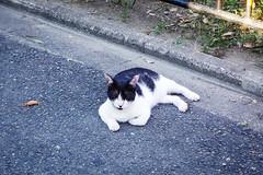 Today's Cat@2016-08-26 (masatsu) Tags: cat catspotting thebiggestgroupwithonlycats pentax mx1